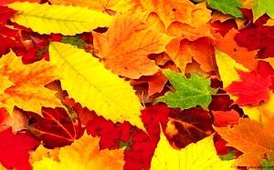 Стихи об осени. Листья