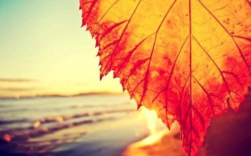 Стихи об осени. Море