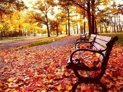 Стихи об осени. Скамья