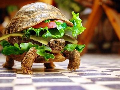 Хочу похудеть! Черепашка-гамбургер