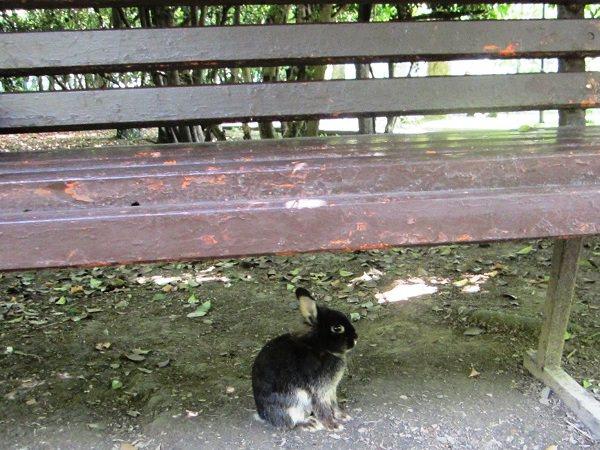 Нижний Дендрарий. Кролик