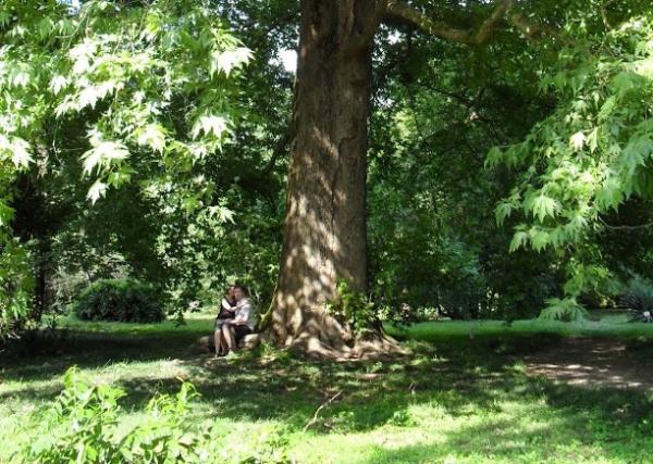 Парк Южные культуры. Дерево