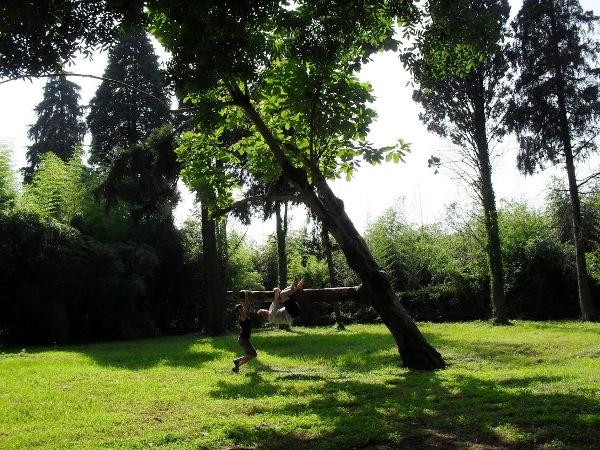 Парк Южные культуры. На дереве
