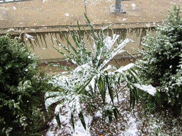 Снег в Сочи. Пальмы