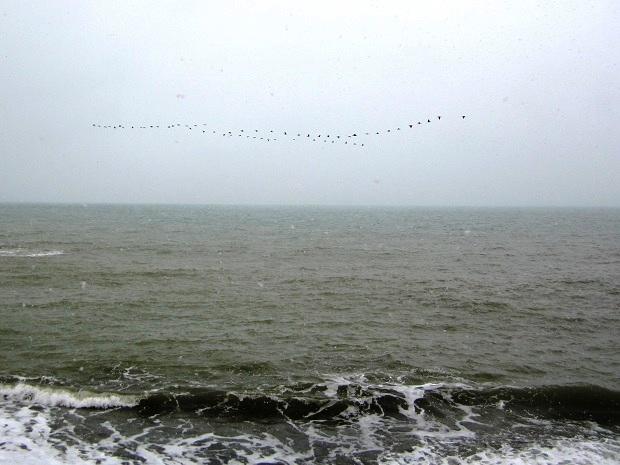Снег в Сочи. Птицы улетают