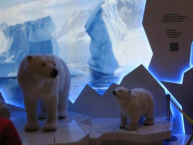 Сочи, год после игр. Белые медведи в Сочи