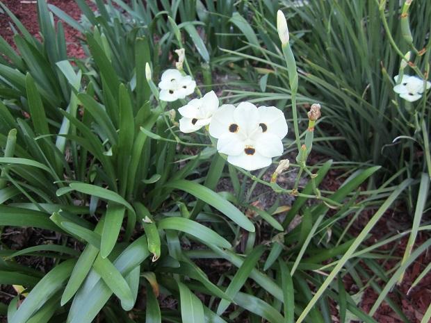 Санта-Клара. Неизвестный цветок