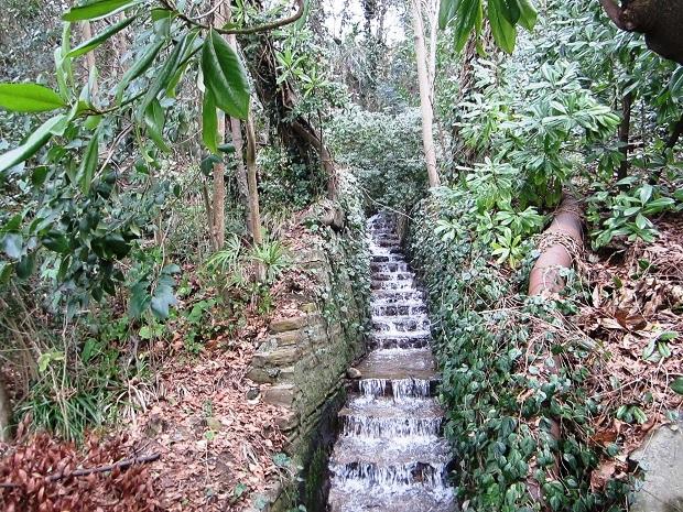 Терренкур в Сочи. Растительность