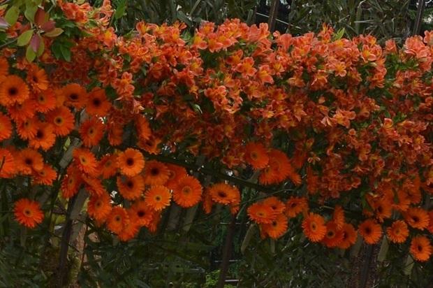 Праздник цветов в Сочию Герберы