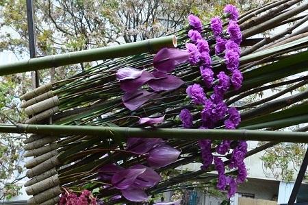 Праздник цветов в Сочи. Гвоздики