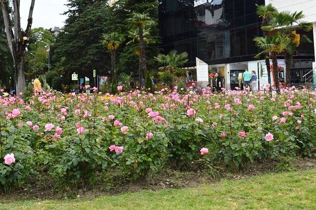 Праздник цветов в Сочи. Розы
