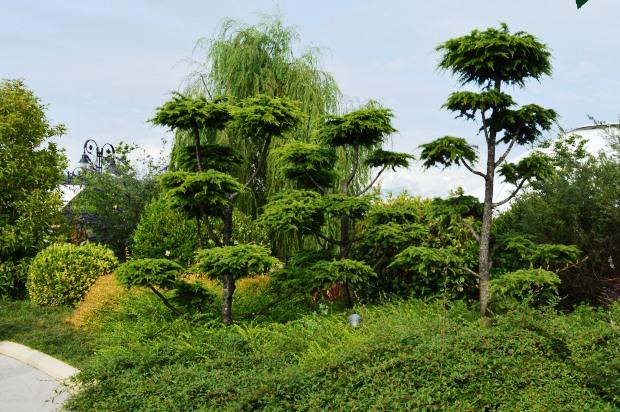 Сочи Парк. Деревья
