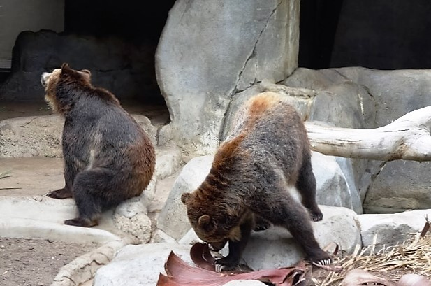 Зоопарк в Сан-Диего. Медведи