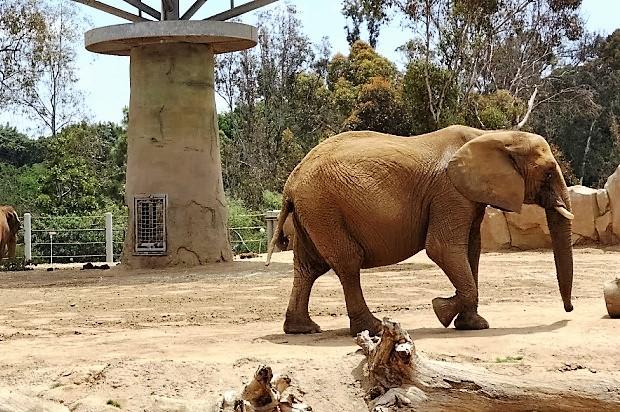 Зоопарк в Сан-Диего. Слон