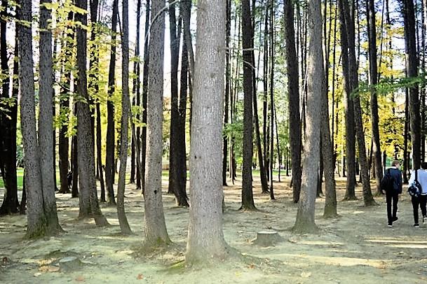 Курортный проспект в Сочи. Парк Гарбе