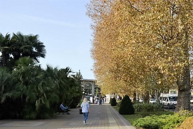 Курортный проспект в Сочи. Платановая аллея