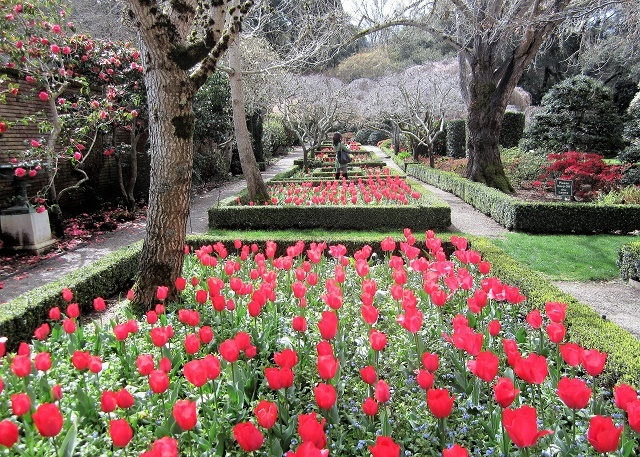 Сады Филоли. Тюльпаны1