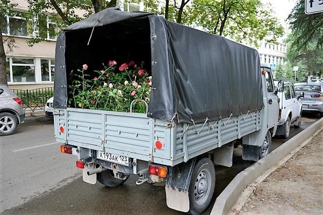 Розы на улице Роз4