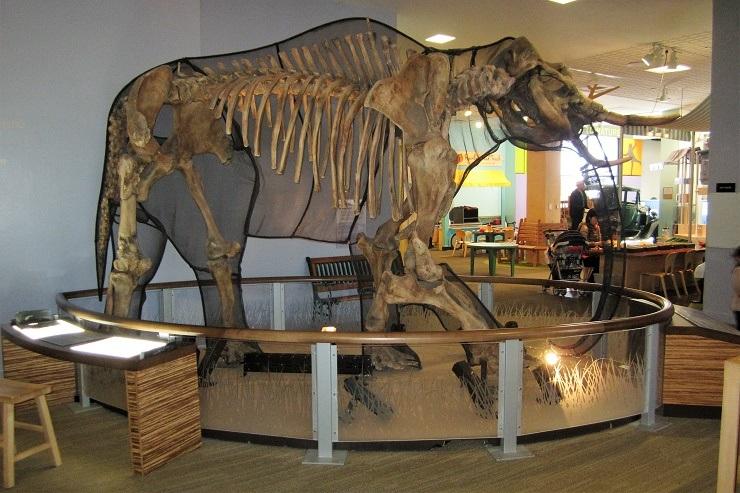 Детский музей в Сан-Хосе. Зона мамонтов