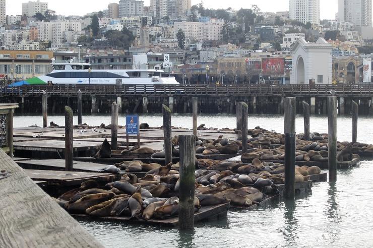 Сан-Франциско. Морские львы