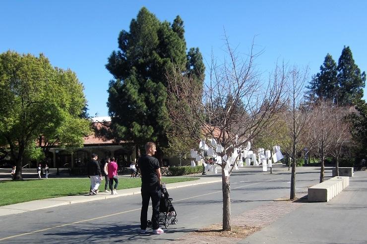 Стэнфорд. Дерево желаний