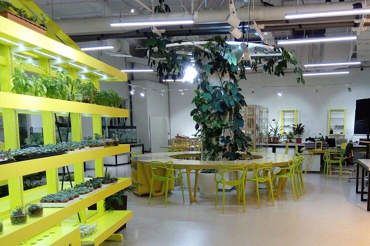 Парк науки и искусства Сириус. Лаборатория гидропоники