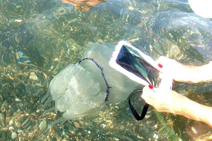Девушка снимает медузу корнерот