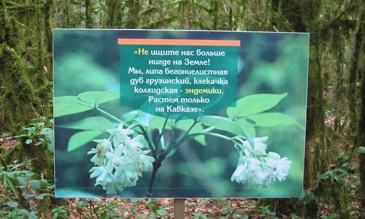 Табличка в Тисосамшитовой роще